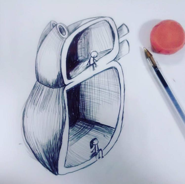Corazón partido Anatomía